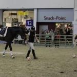 Verkaufspferd im Gelassenheitstraining