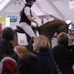 Vor großem Publikum - Präsentation der Verkaufspferde