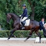 Reserve-Reitpferdechampion 3-jährige Stuten und Wallache Ancelotti
