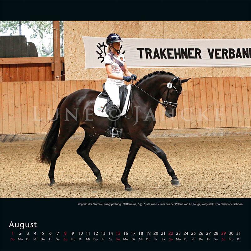 Kalender Trakehner Rheinland 2021 August Pfefferminz