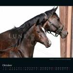 Kalender Trakehner Rheinland 2021 Oktober Hengstfohlen von Ivamhoe Courona