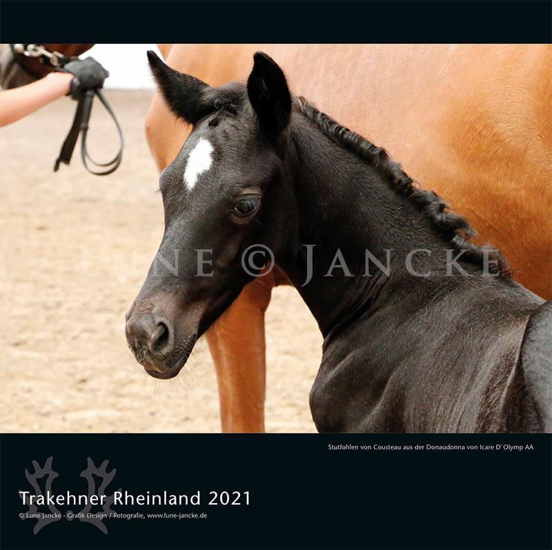 Kalender Trakehner Rheinland 2021 Titel